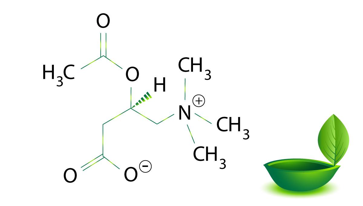 L-Acetil-carnitina